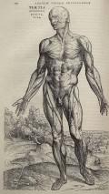 """Andreas Vesalius' """"De humani corporis fabrica"""", page 178"""