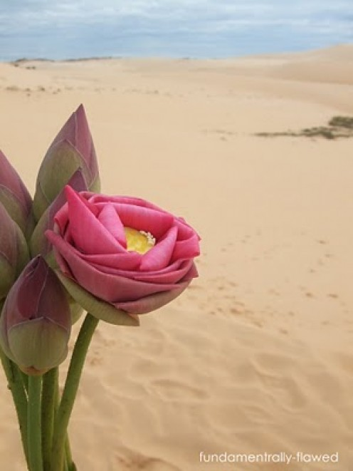 As a flower in the desert is  a voice of praise in the midst of suffering