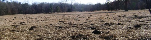 Landscape Dotted With Dung.....