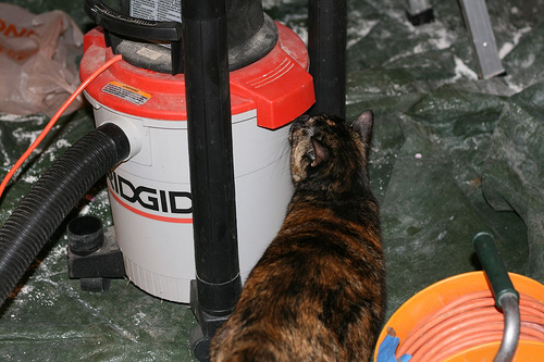 """the shop vac right here, this is mine"" by clared23, on Flicker, herehttp://farm4.static.flickr.com/3153/2435211449_6d0140c348.jpg"