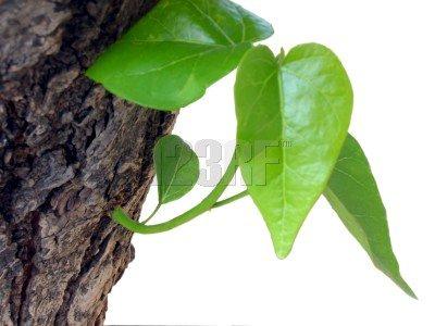Cute Plant...