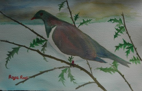 The Native Pigeon or Kereru in Maori. My water color