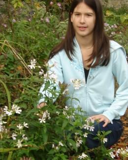 Poppy with Soapwort flowers in the garden