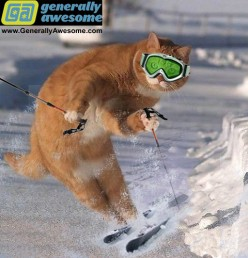 Winter Sports Funny Pics and Mishaps