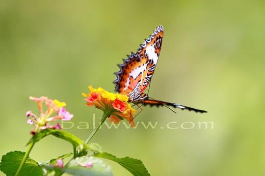 Bali Butterfly Park www.bali.com