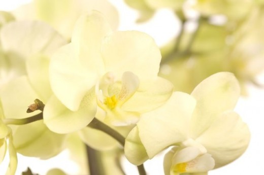 gentle shades of yellow lime and cream