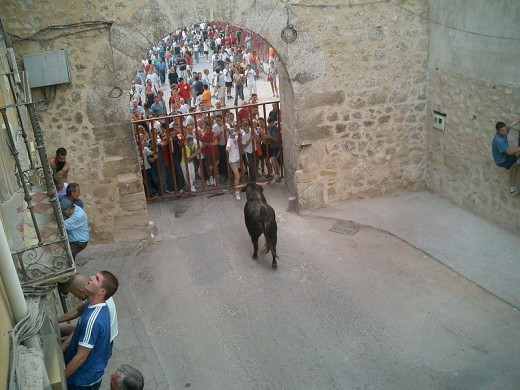 bull watching runners