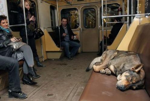 A beggar dog takes an impromptu nap.