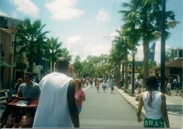 Hollywood Studios, Disney World (I had never seen a real palm tree until this trip! Lol!)