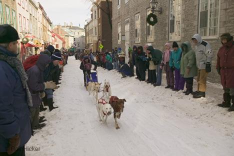 Quebec Winter Festival, Dog Race