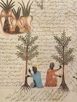 inner page of Kitb al-nabt