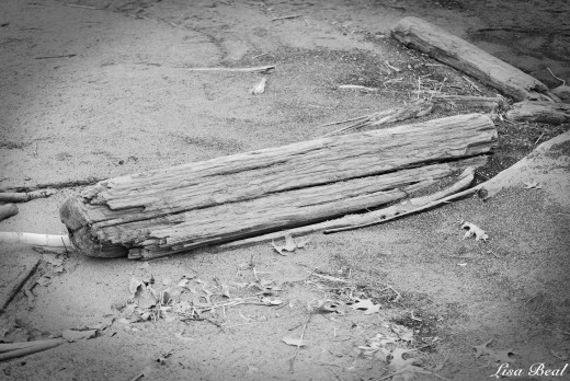 Random photo of wood laying in the sand.