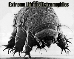 Extreme Life the Extremophiles