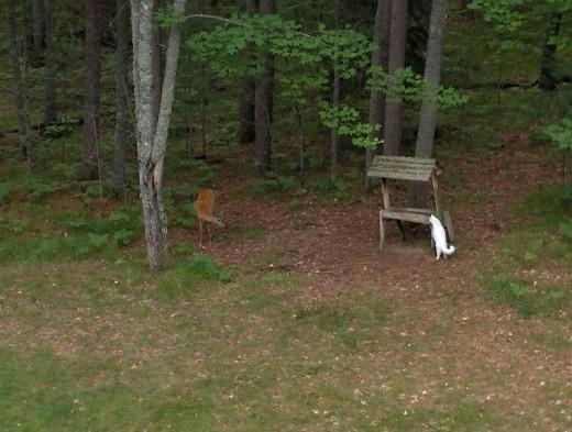 Deer meets Softey - or is it vice versa?