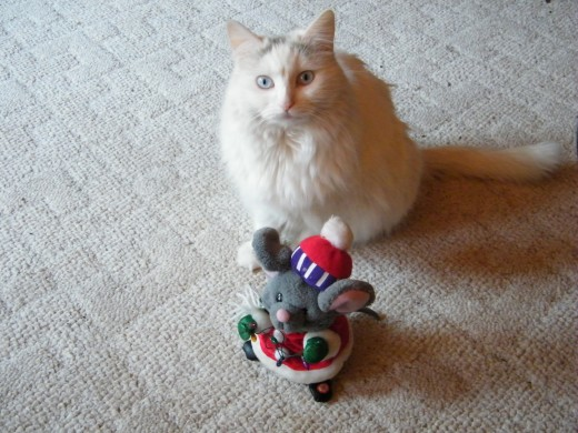 Softey and her fav toy from Christmas 2008
