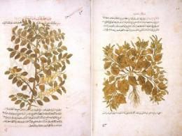 Kitab al-jami fi al-adwiya al-mufrada or as The Corpus of Simples