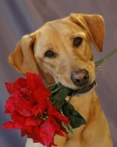 Dog Love: Flowers For You (Andrea Yankovsky)