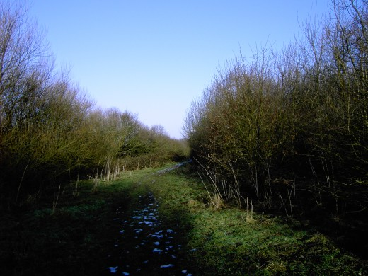 view of the track running down the back of the woodland.