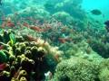 Isla Verde, Philippines