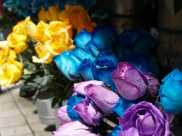 Yellow Roses mean friendship. Blue Roses mean unattainable. Purple Roses means love at first sight.