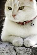 Home Based Business Idea 2 - Pet Sitting
