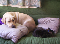 Dog and Cat Sleeping Together (from Flickr)