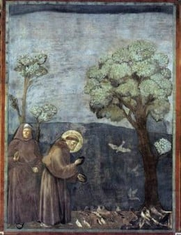 St. Francis of Assisi preaching the bird http://communio.stblogs.org/