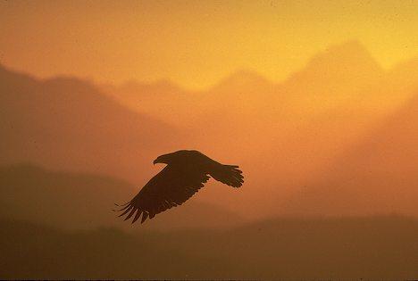 Flying in the Heart of Wisdom