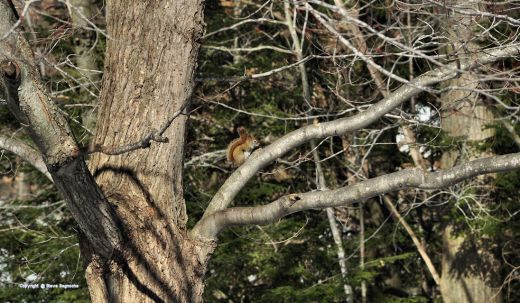 Even the hyper-active red squirrel seemed to slow down to soak up warmth of the sun.