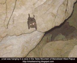 Photograph of a bat taken deep inside a dark cave