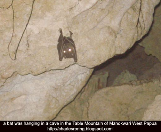 Photograph of a bat taken deep inside a dark cave