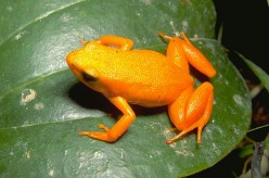DREAM REVELATION ABOUT POISONOUS FROGS - WHAT IS SPIRITUAL POISON