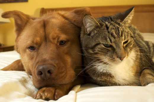 Together, we can put an end to animal abuse and neglect!