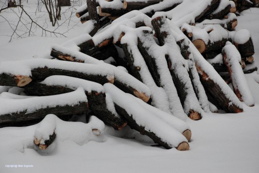 The first part of the three-part warming that firewood gives one comes with the cutting of the tree and collecting of the wood, such as these maple logs.