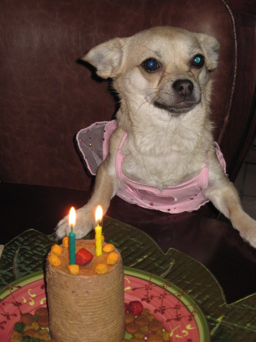 Our dog, Chika, patiently waits as we sing Happy Birthday