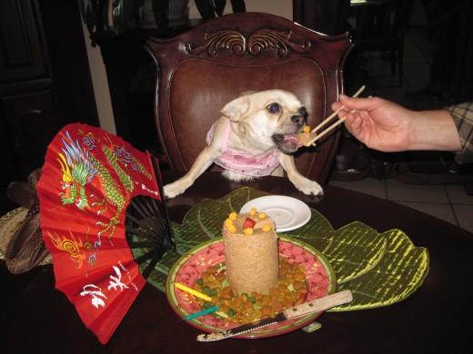Come on! Dogs don't eat with chopsticks