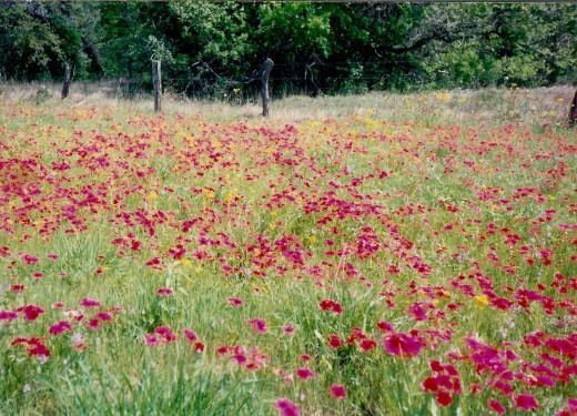 Gorgeous fields of wildflowers