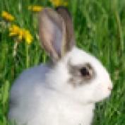 rabbitscages profile image