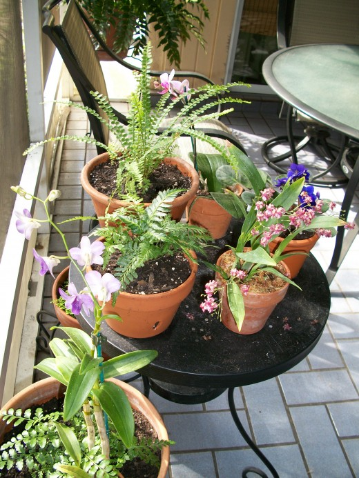 Orchids, baby ferns and violets, oh my.