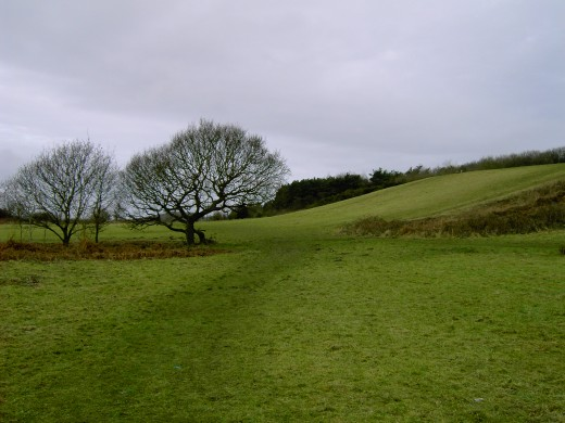 We are now to pass through the gap between the oaks towards our next destination