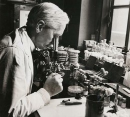 Penicillin: Professor Alexander Fleming (1881-1955) at work in his laboratory. Working at St Mary's Hospital, Paddington, London, Fleming discovered the antibiotic penicillin in 1928. He successfully isolated the chemical from the mould Penicillium.