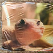 Leopard Gecko Gal profile image