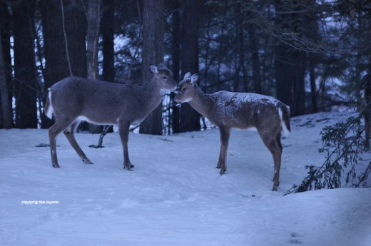February saw deer return to the yard, and the rhythm of nature beats on.