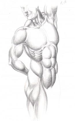 Anatomical figure drawing