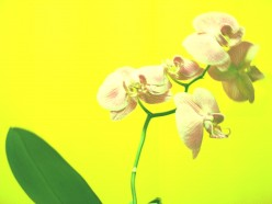 A Poem For My Great Daughter: An Orchid Of Light For You