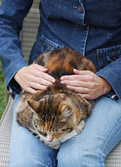 Not just for humans,Even little ones enjoy the healing touch of Reiki.....All photos courtesy Flickr