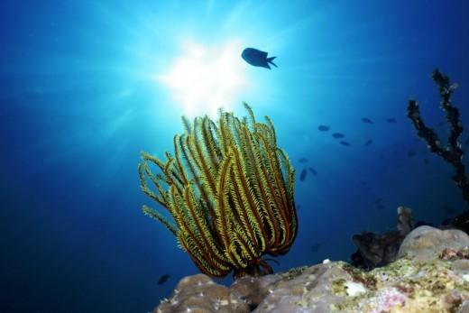 Davao underwater life enjoyurlifeinvaccation.blogspot