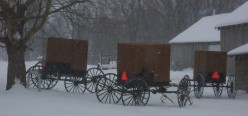 Photos of Amish Buggy's