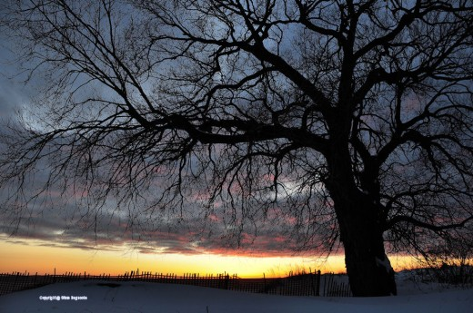 A tree stands stark and bare of leaves in front of a February sunset at the Stearns Park Lake Michigan beach in Ludington.