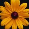 sakthikmohanastro profile image